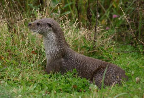 Otter David Hetherington