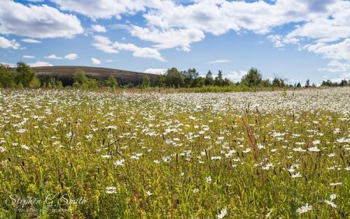 Wildflower meadow July 20 c S Smith GALLERY-min